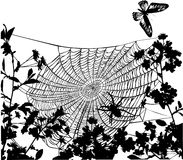 Spider in flowers illustration Stock Photos