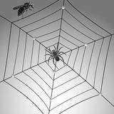 Spider fly and web. Spider, fly and web; abstract vector art illustration; grayscale composition vector illustration