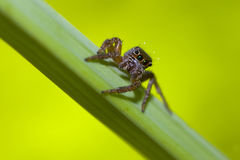 Spider foraging. On the plant Stock Photo