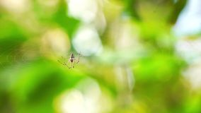 Spider in forest stock footage