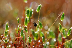 Spider on forest moss in sun rays closeup Stock Photo