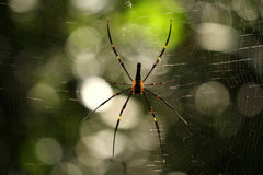 Spider in the forest. With natural bokeh Stock Images