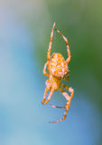 Spider in the forest. Stock Photo