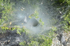 Spider funnel web Royalty Free Stock Images