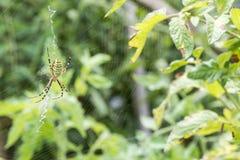 Spider in a garden Stock Photos