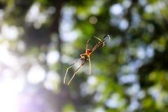 Spider in the garden. Stock Photos