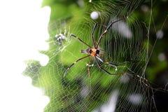 Spider in the garden. Stock Image