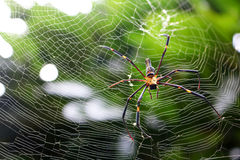 Spider in the garden. Royalty Free Stock Images
