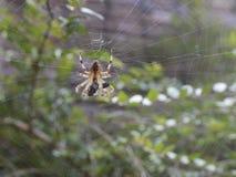 Spider in garden royalty free stock photo