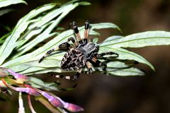 Spider garden-spider on a green leaf. Close-up royalty free stock photos