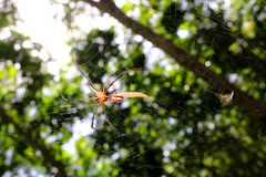 The spider in the garden. Stock Photo