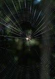 Spider in Geometric Web Stock Photos