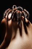 Spider on girl's shoulder Stock Images