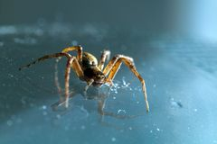 Spider on the glass macro. Macro closeup spider. Insect standing on the mirror. Mirror reflection. Bokeh, light reflections royalty free stock photos
