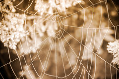 Spider gossamer with some water droplets early in the morning Stock Image