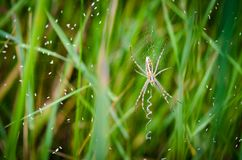 Spider in the grass Royalty Free Stock Photography