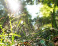 Spider in the grass of the Woodland. Spider hidden in its spider web in the grass of the woodland Royalty Free Stock Photo