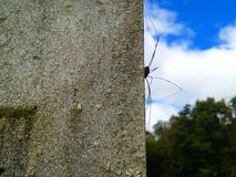 Spider on Gravestone Royalty Free Stock Image