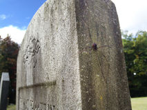 Spider on Gravestone Stock Photo