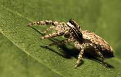 Spider in the green Royalty Free Stock Image
