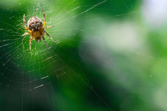 Spider on a green background Royalty Free Stock Photo
