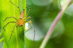 Spider with green background Stock Image