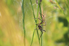 Spider. In a green grass stock photography