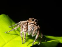 Spider on the green leaf. Royalty Free Stock Photos