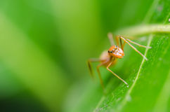 Spider on green leaf background Stock Photos