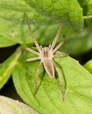 Spider on a green leaf. close-up. In the park in nature Royalty Free Stock Images
