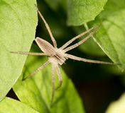 Spider on a green leaf. close-up. In the park in nature Royalty Free Stock Photo