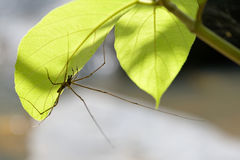Spider and green leaf Stock Images