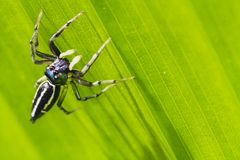 Spider on the green leaf. stock photos