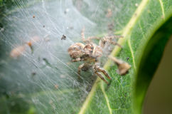 Spider in green nature background Royalty Free Stock Photography