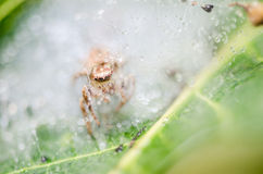Spider in green nature background Royalty Free Stock Photos