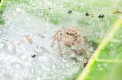 Spider in green nature background Royalty Free Stock Images