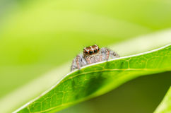 Spider in green nature background Stock Photos