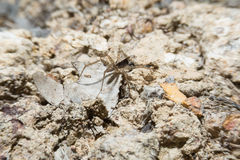 Spider on ground with macro lens. Stock Photo