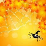 Spider of Halloween Royalty Free Stock Image
