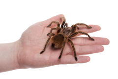 Spider on Hand Stock Photos