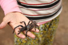 Spider on hand Stock Photo