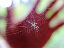 Spider in hand. Beauty in nature - Spider in hand Royalty Free Stock Images