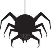 Spider Hanging Stock Photos