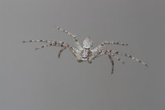 Spider hanging form web Stock Image