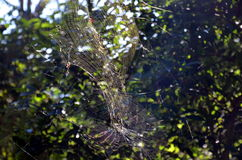 Spider hanging on the spider web Stock Photo