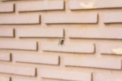 Spider hanging on a web Stock Photos