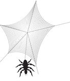 Spider Hanging In Web Stock Photo
