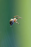 Spider hangs in air Stock Photo