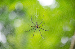 A spider has finding  victim. A spider has finding and trapping any victim Royalty Free Stock Photos