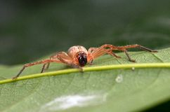 Spider3 Royalty Free Stock Photo